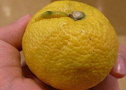 じゃばらとは 花粉症にいい柑橘類ですよ